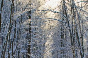 winterwald.news