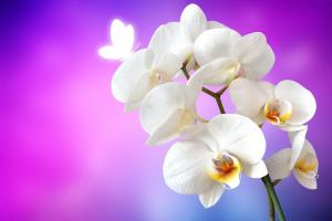 orchid 1259019 960 720.news