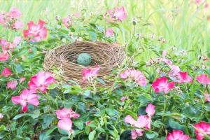 bird nest 2171412 1280.news