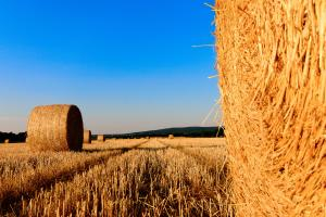 straw bales 1155003 1920.news