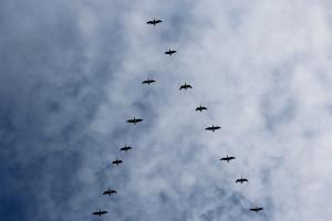 bird migration 3945719 1920.news